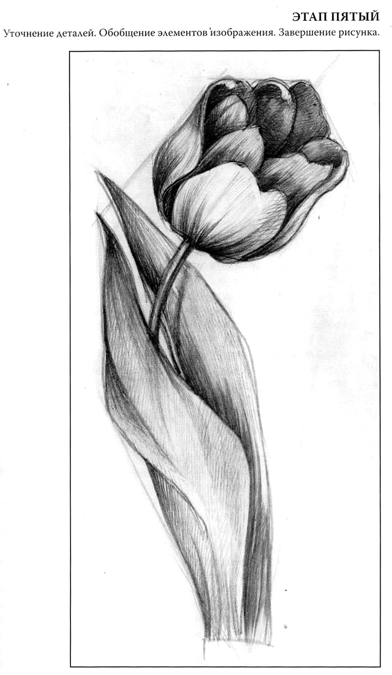 Красивые картинки цветов нарисованные карандашом 3