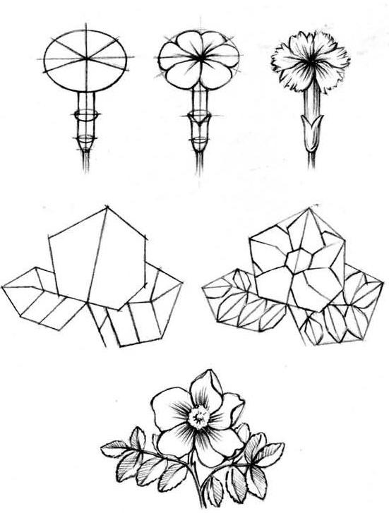 Схемы строения цветов разной