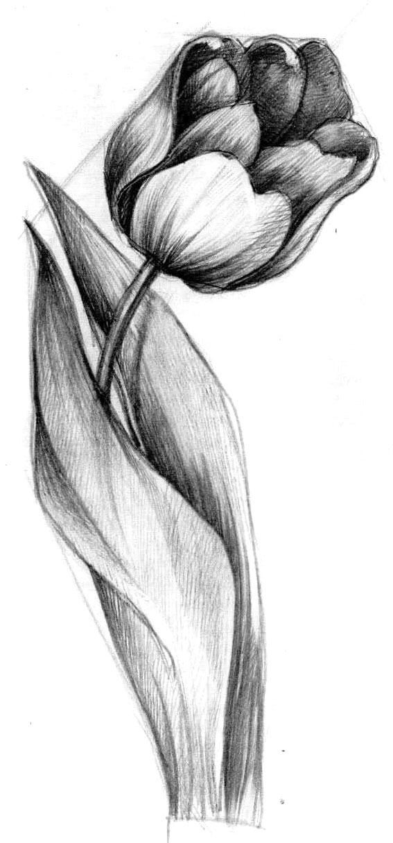 Рисунок «Цветок» 27