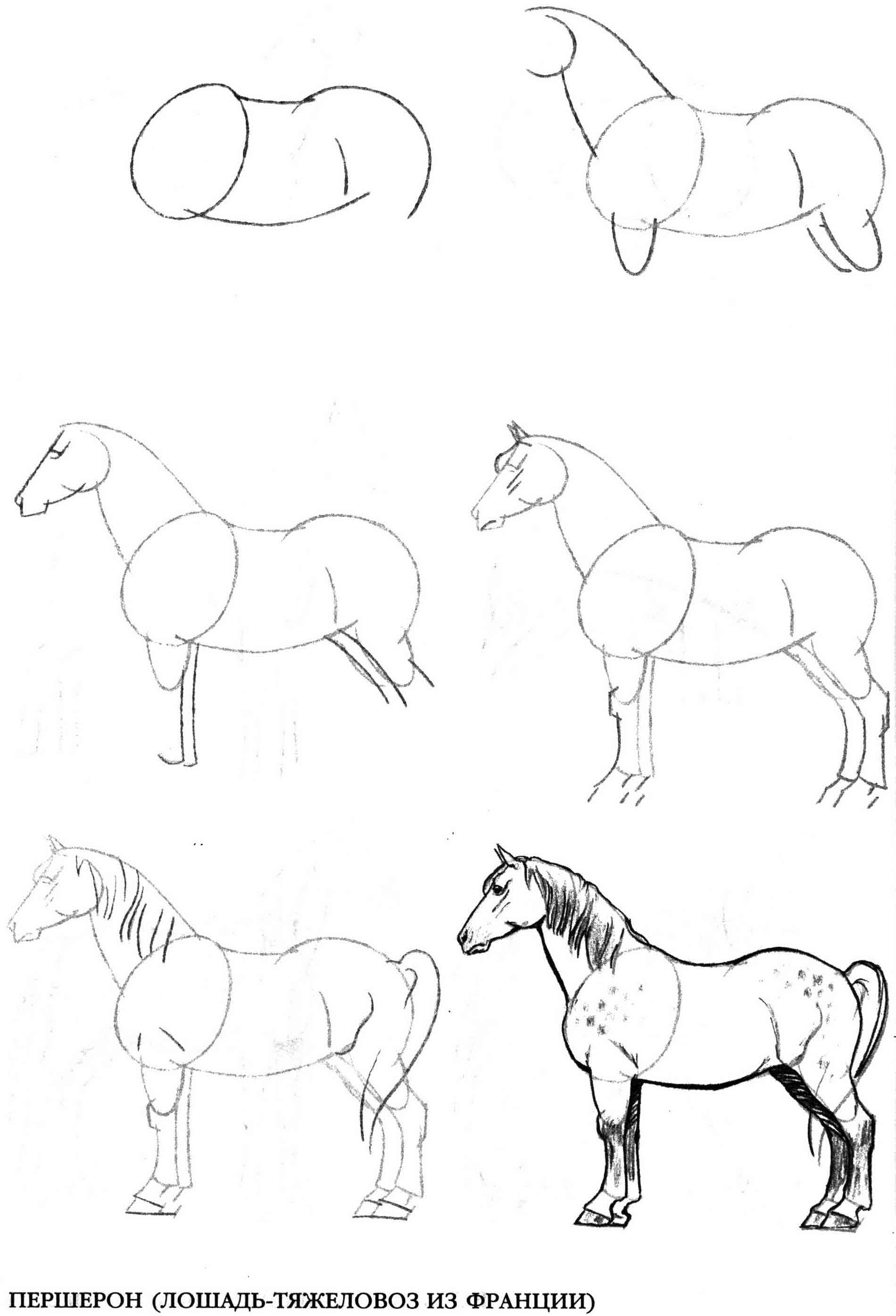 Карандашом лошадь поэтапно