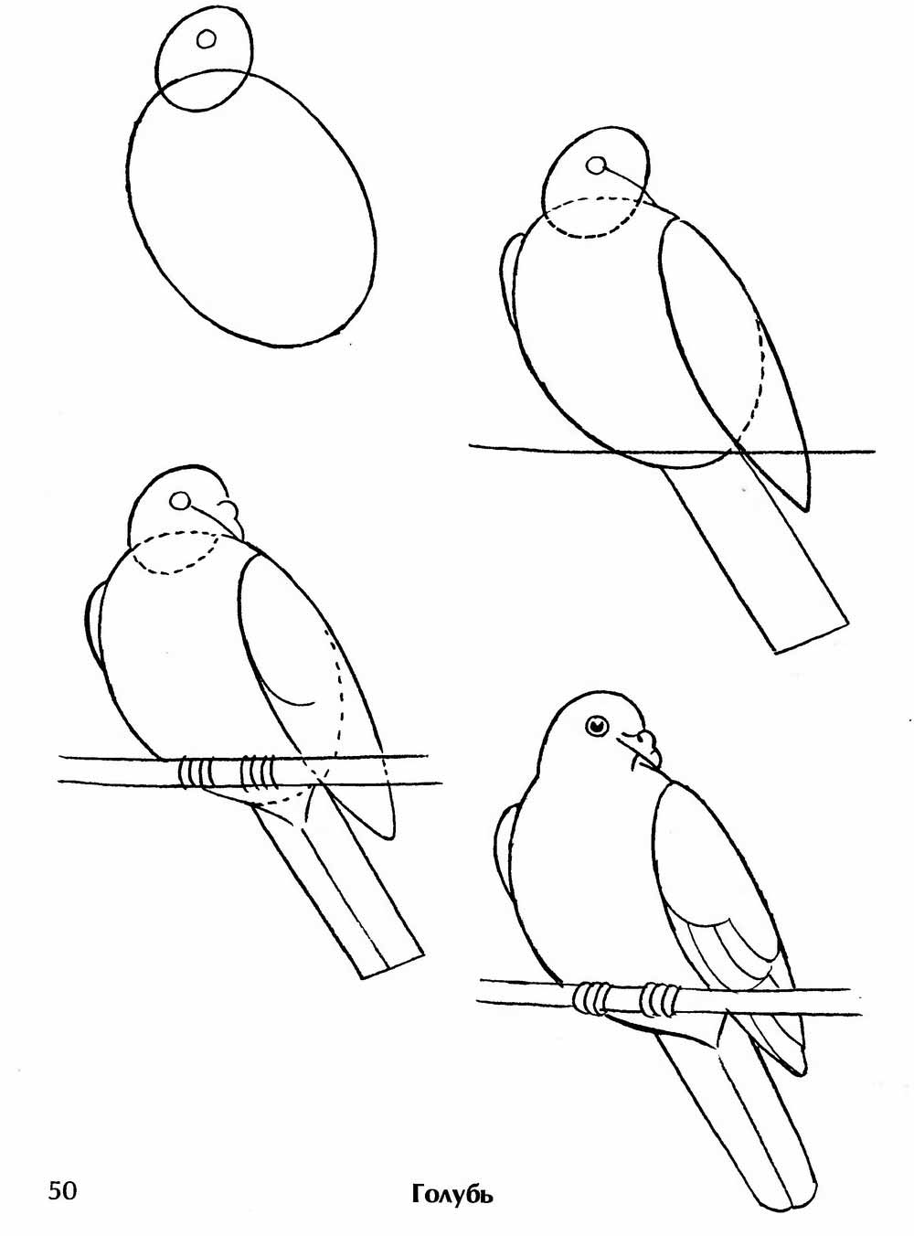 Птиц для детей пошагово