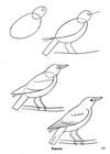 Поэтапное рисование птицы галки.  Лучшие картинки со всего интернета.