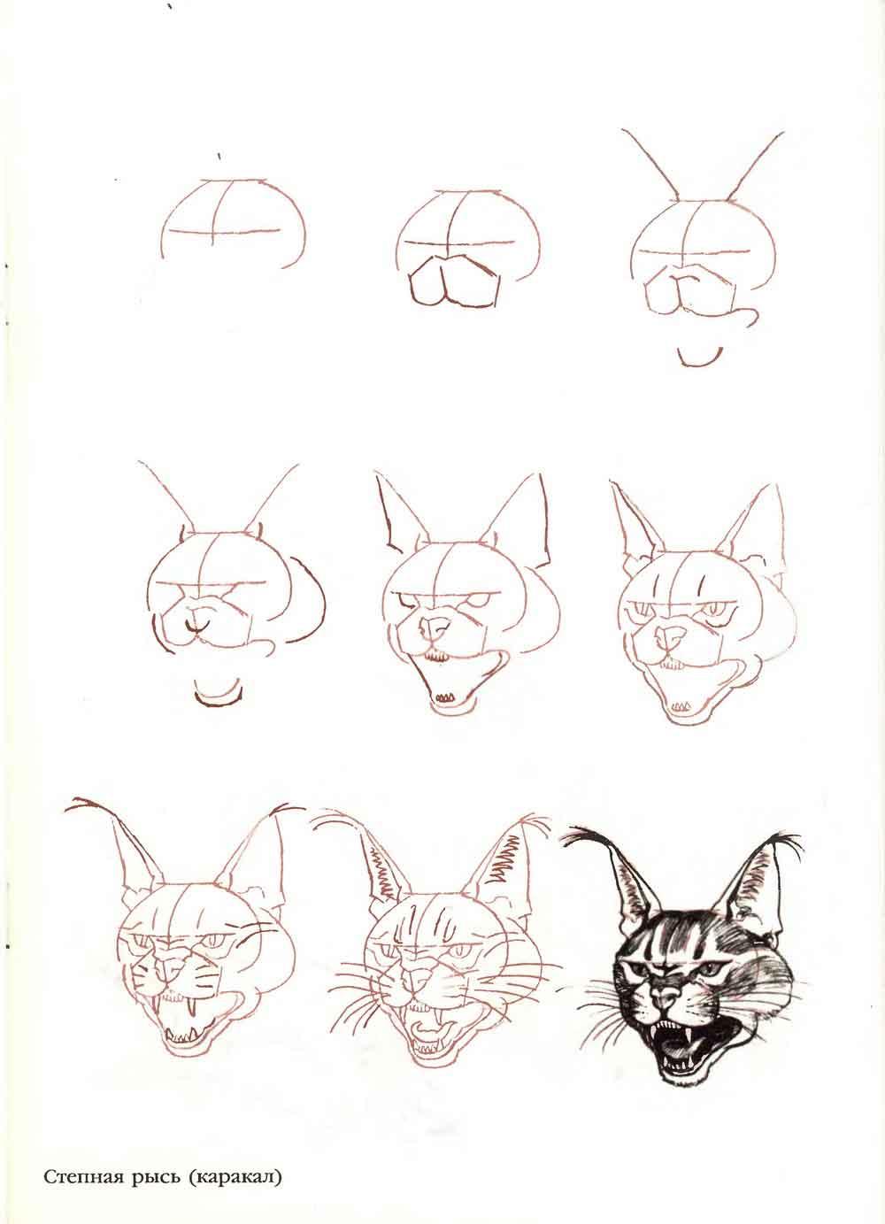 Как нарисовать кошку своими руками 32