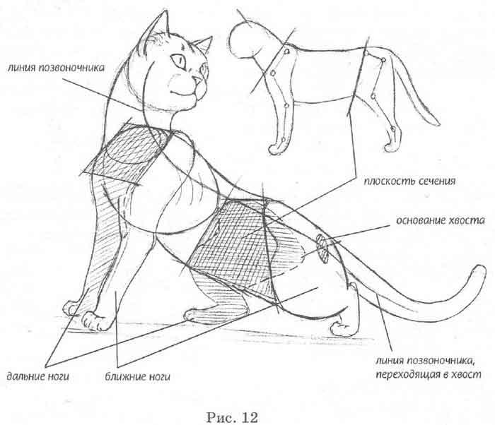 Рисунки тела кота