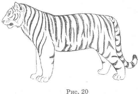 Рисовать тигра тоже начинай с