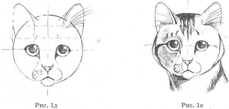 рисуем голову кошки