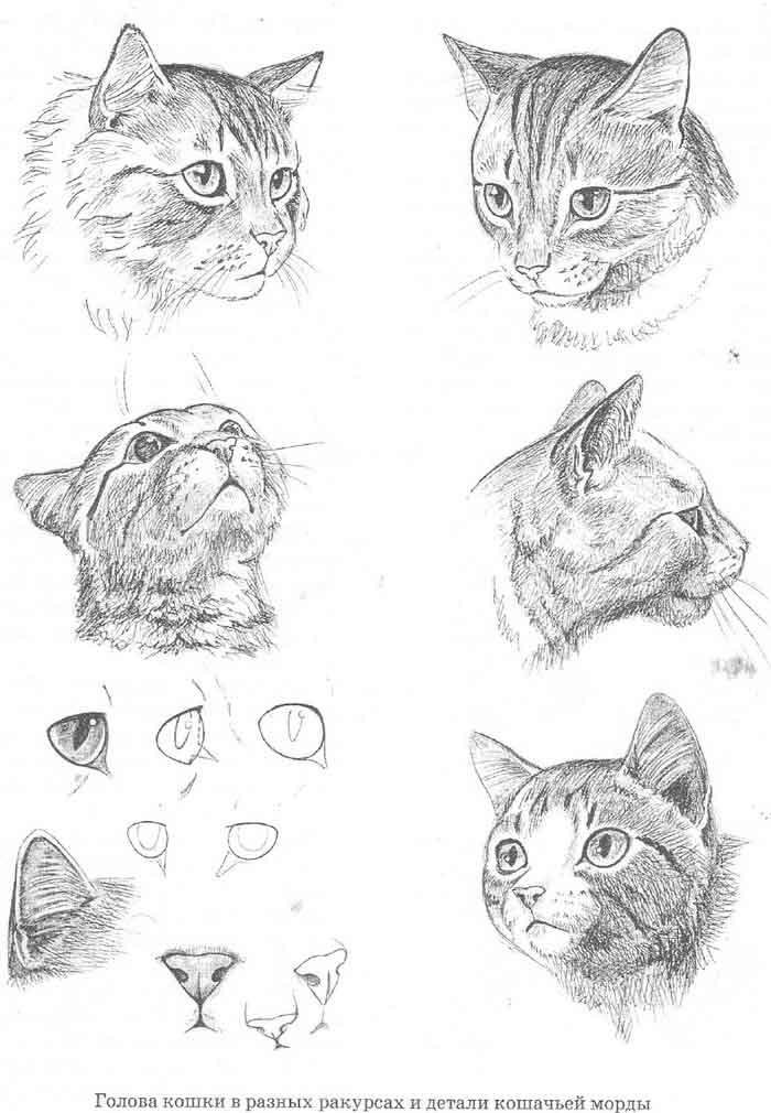 Но кошачья мимика — это