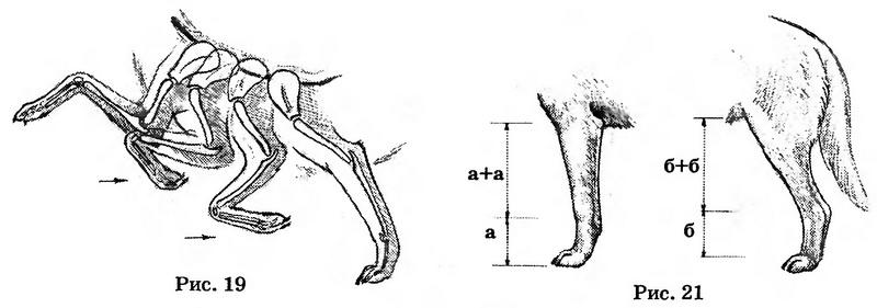 Рисунок собаки - собака в